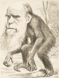 Scientist Charles Darwin caricatured as an ape