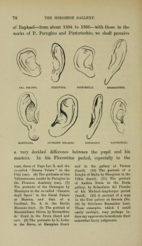 Ears from Italian Painters