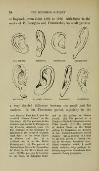Ears from Italian Painters