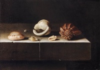 Five Shells on a Slab of Stone (1696) by Adriaen Coorte, see still life painting