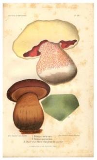 Les champignons considérés (1884) - Lucien-Marie Gautier