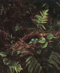 "Bird's Nest and Ferns (1863) by Fidelia Bridges""When we examine a nest, we place ourselves at the origin of confidence in the world."" -—Gaston Bachelard, The Poetics of Space"