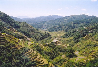 Rice terrace in The Philippines